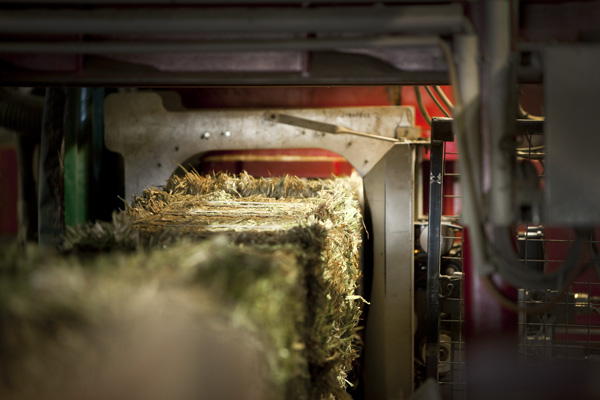 Sliced bales are compressed into logs and strapped