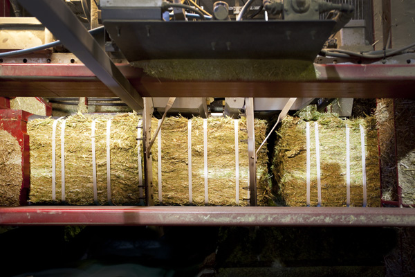 Logs are sliced into required bale size